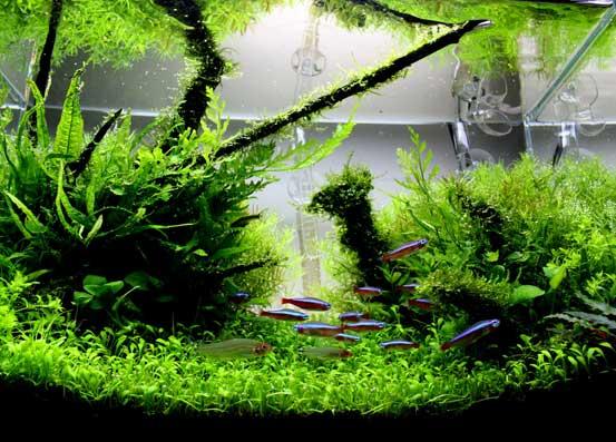 guide to aquascaping the planted aquarium